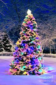 christmas tree with snow christmas tree in snow amazing world