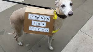periodic table of dogs rowan hooper on twitter periodic table dog marchforscience london