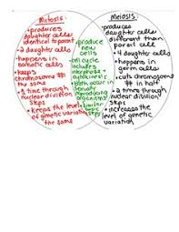 mitosis meiosis kids worksheets google search