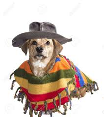 Ghost Dog Halloween Costumes by Halloween Dog Images U0026 Stock Pictures Royalty Free Halloween Dog