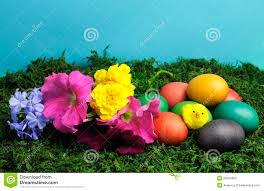 colorful easter eggs with yellow and pretty flowers stock