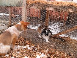Outdoor Rabbit Hutch Plans 2012 Project Rabbit Hutch Yellow Bird Acres