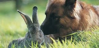 rabbit banner personal consultations nac