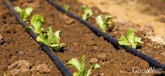 how to install soaker hoses in your vegetable garden