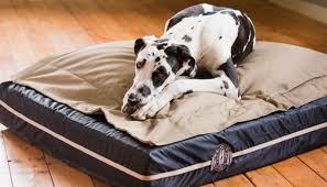 if you have an extra large breed you need a big dog bed from