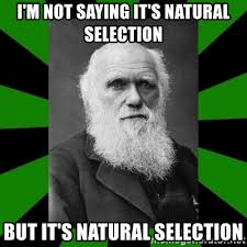 i m not saying it s natural selection but it s natural selection
