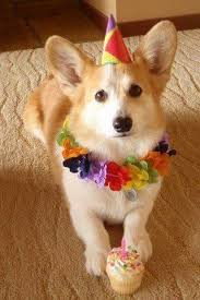 Corgi Birthday Meme - pin by jesse mcclain on animals pinterest birthdays and animal