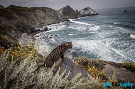 California How To Travel With A Cat images Mr mahj goes west traveling with a cat dog photography pet jpg