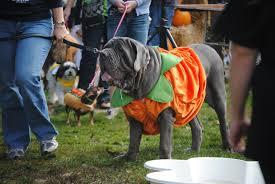 Dog Halloween Costumes Wordless Wednesday Pet Halloween Costumes Wild