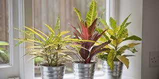 Beautiful Indoor Plants Indoor House Plants For More Beautiful Houseplants Pictures