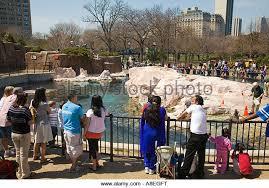 Lincoln park zoo lion stock photos lincoln park zoo lion stock