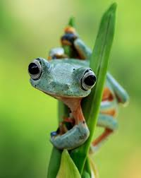 this photographer photographs frogs like you u0027ve never seen before