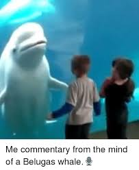 Whaling Meme - me commentary from the mind of a belugas whale meme on me me