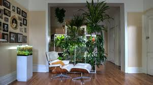 Home Interior Plants by Indoor Plants For Home Greenery Nyc