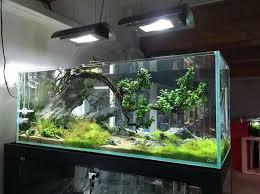 Aquarium Aquascaping 57 Best Aquascaping Images On Pinterest Aquarium Ideas