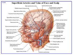 Human Anatomy Textbook Online Netter U0027s Atlas Of Human Anatomy
