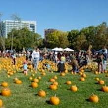 pumpkins in the park san jose ca at discovery meadow sanjose