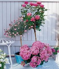 balkon grã npflanzen hochstämme bild 8 living at home