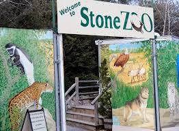 Stone Zoo Christmas Lights by Urban Safari The Stone Zoo Rainydaymagazine