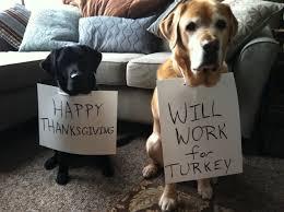 11 thanksgiving staples that are hazardous to pups thanksgiving