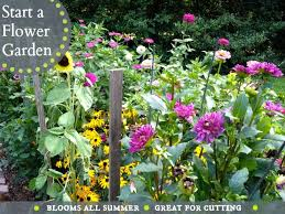 Summer Flowers For Garden - best 25 flowers for cutting garden ideas on pinterest cut