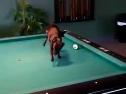 smallest room for a pool table world s smallest pool player youtube