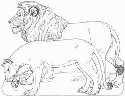 coloriage animaux sauvages les beaux dessins de meilleurs