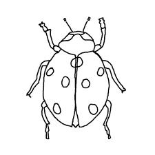 102 dessins de coloriage Insectes à imprimer