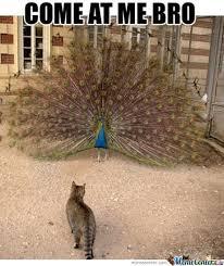 Peacock Meme - peacock swag by ragingpixie meme center