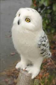 White Owl Meme - beautiful white owl favorite birds pinterest chouette oiseaux