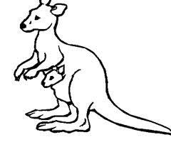 coloriage kangourou maternelle