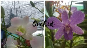 indoor orchid garden how do youtube