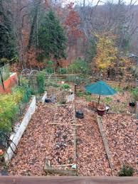 Vegetable Garden Preparation by Preparing The Charlottesville Vegetable Garden For Winter