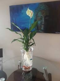 use a vase rocks and a peace lily cleaned of all soil as a