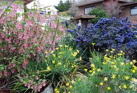 california native plant garden design making u0027messy u0027 look good habitat network