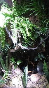 amphibian and reptile terrarium album on imgur