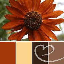 25 orange color schemes ideas blue orange