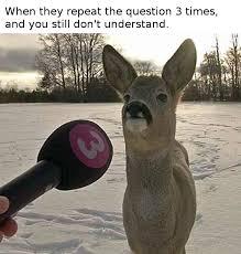 Deer Meme - awkward deer album on imgur