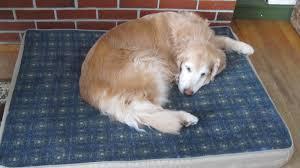 Bean Bed Ll Bean Dog Beds Korrectkritterscom