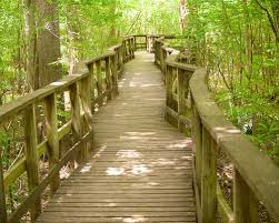 South Carolina national parks images Reviews of kid friendly attraction congaree national park south jpg