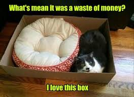 Mean Cat Memes - it s the best one yet lolcats lol cat memes funny cats