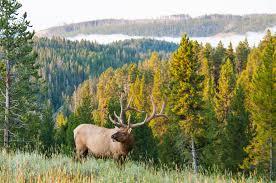montana hunting guides sage peak hunting
