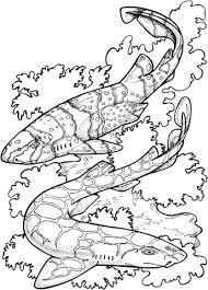 zebra sharks coloring free printable coloring pages