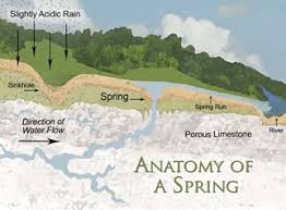 what is spring springs in the suwannee region save our suwannee
