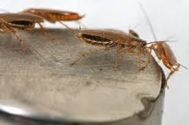 Ants In Kitchen Cabinets How To Get Rid Of Ants Angie U0027s List