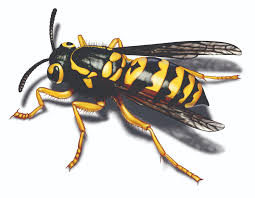 how to kill yellow jackets with detergent bee traps and helpful