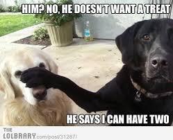 boxer dog jokes daily dog joke of the day daily dog breeds