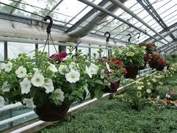 balkon und terrassenpflanzen und terrassenpflanzen als sichtschutz schöner wohnen bautzen