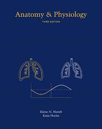 Human Anatomy And Physiology Marieb Hoehn Marieb U0026 Hoehn Anatomy U0026 Physiology 3rd Edition
