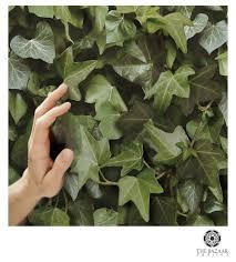 ivy home decor ivy wall wallpaper koziel koziel